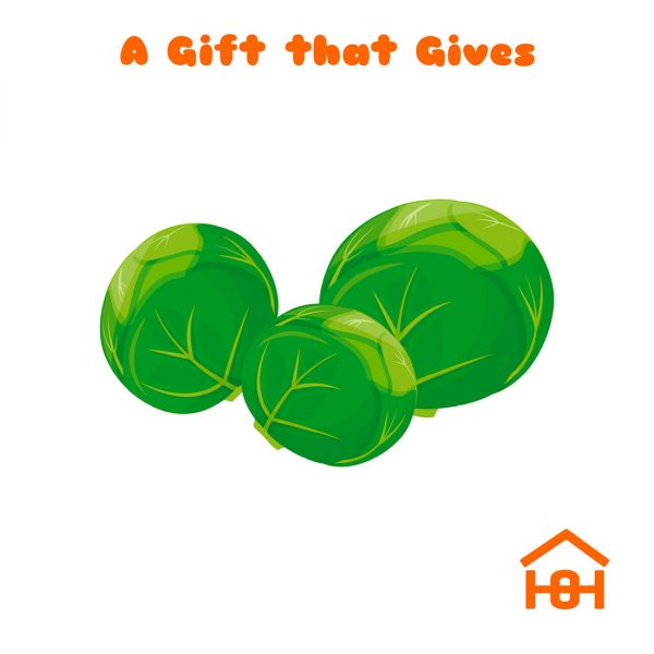 A gift that gives - sprouts - Homeless Oxfordshire cards